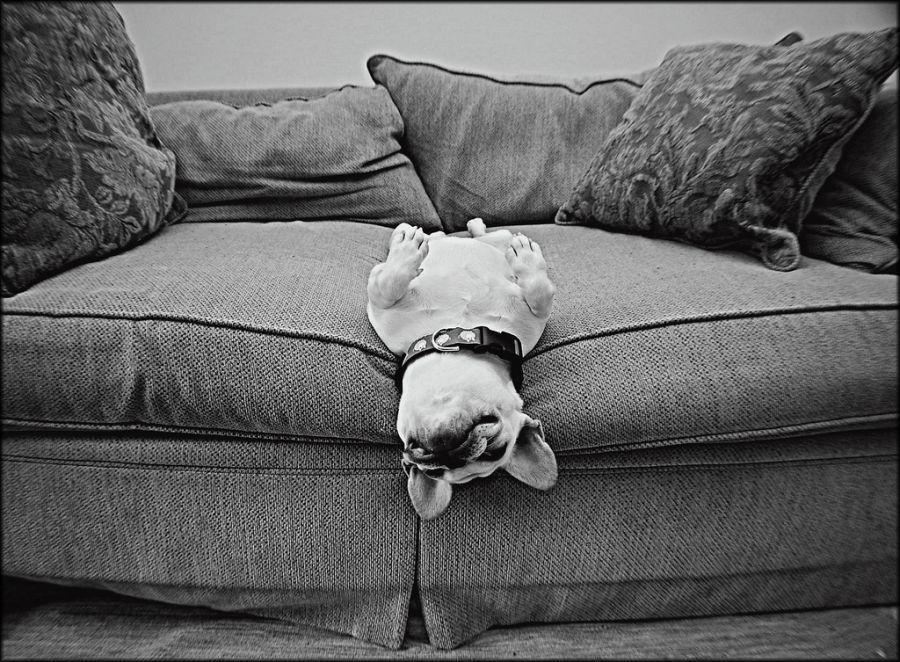 Comfortably Stuck. By kismekate