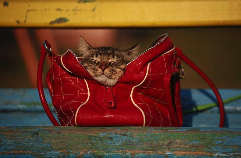 Женская сумочка картинки прикольные