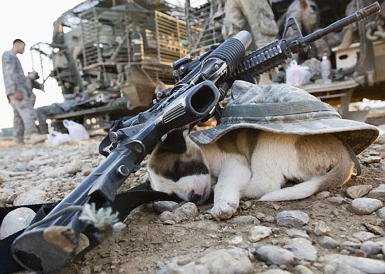 Щенок спит под шляпой американского солдата и винтовки, Бакубе, Ирак, фотография Горан Томашевич-Reuters