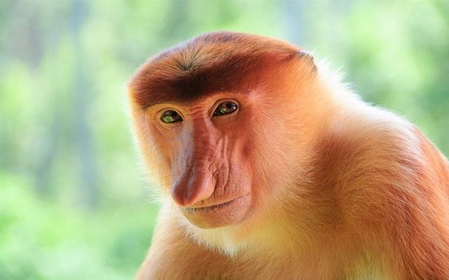 обезьянко