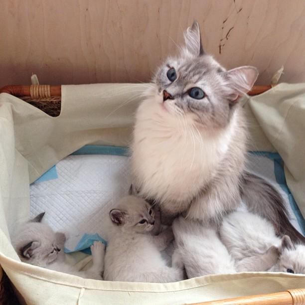 котята Медведева