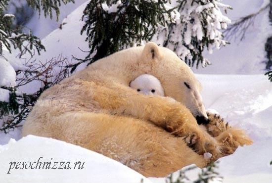 belye-medvedi-mat-i-medvezhonok1