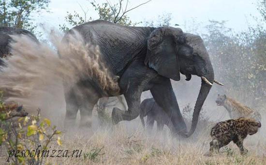 mother-elephant1