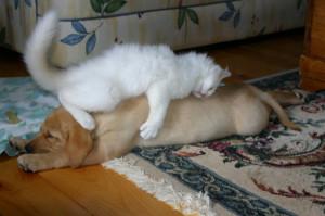 котик спит на собачке