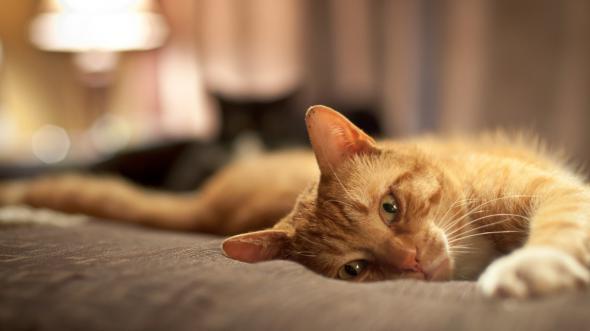 Про наших питомцев - кошек.