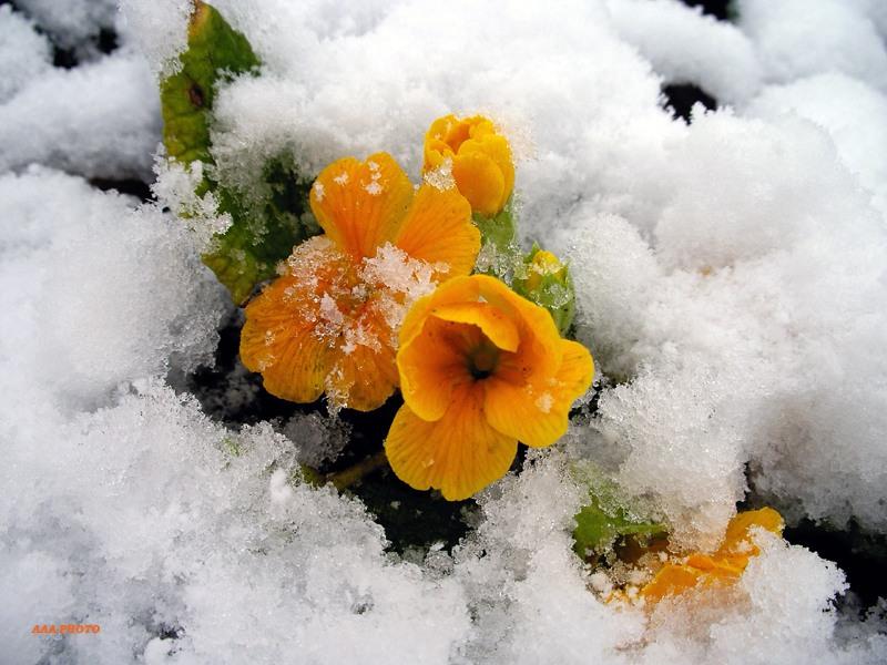 Купить цветы на снегу читать, павелецкая набережная