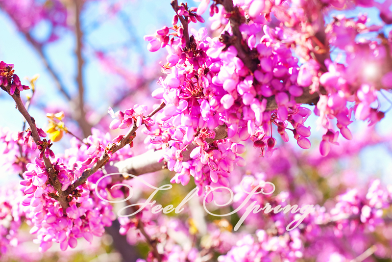 _MG_0949 Spring Pastels