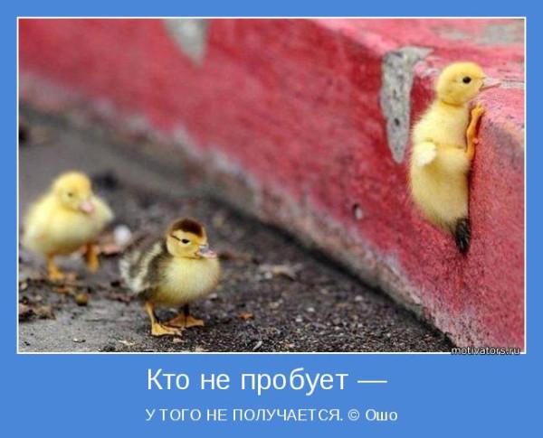 motivator-66382