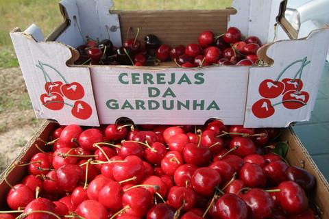 Portugal_cereja_1