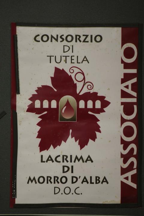 Marche_vino_2