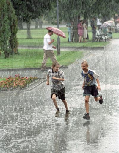 элегантность ежика, мюриэль барбери, летний дождь