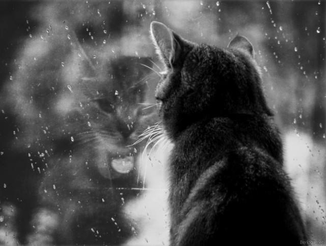 кот, дождь за окном, дождь