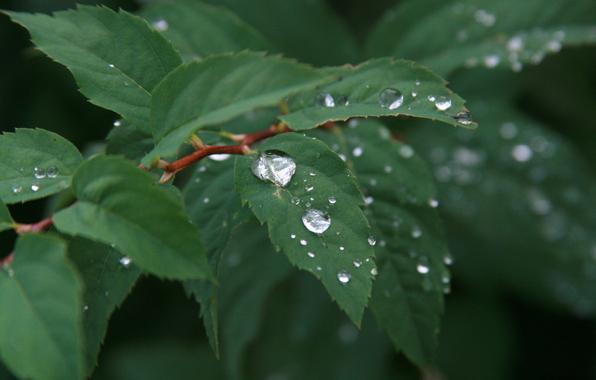 дождь (10)