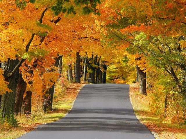осень, дорога, дороги, жизненный опыт