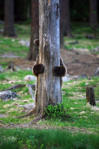 KERTAKÄYTTÖOIKEUS+karhunpentu+valtteri+mulkahainen+