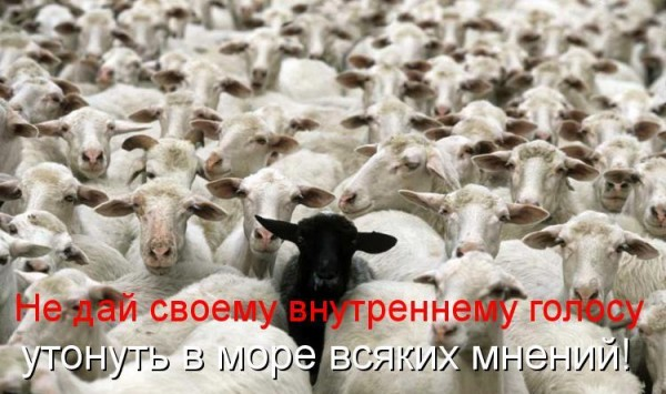 kotomatritsa_q5Z