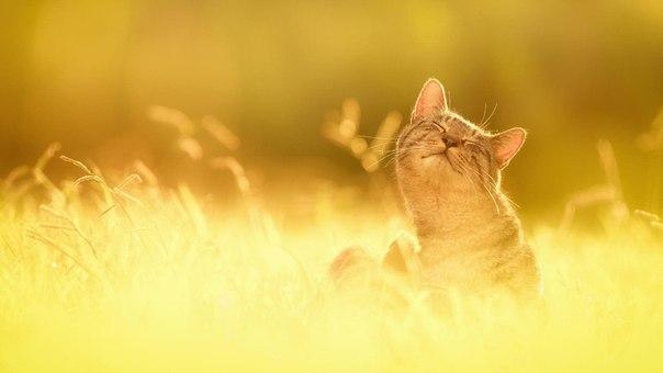 уютный кот