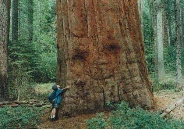 Дереву приятно