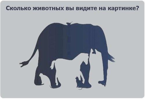сколько животных
