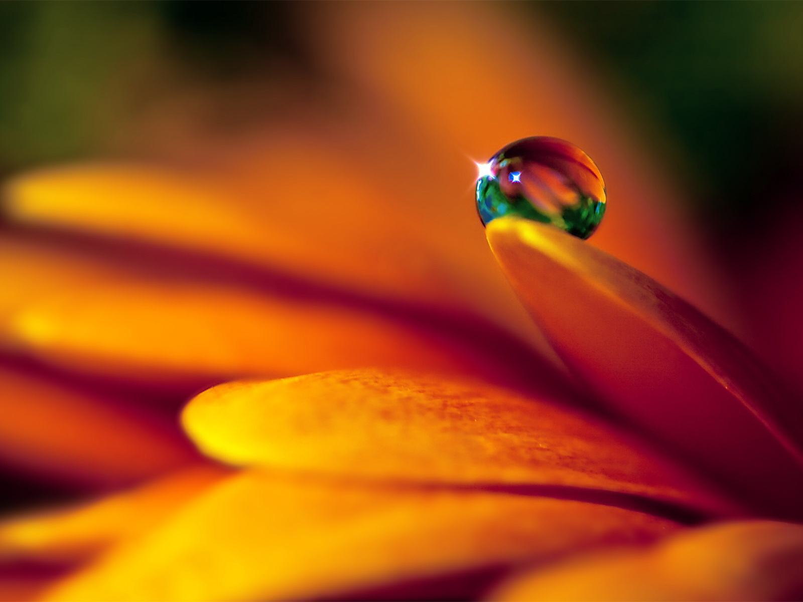 148837_Crystal-Water-Flower-Nature-Background-Wallpapers_1600x1200