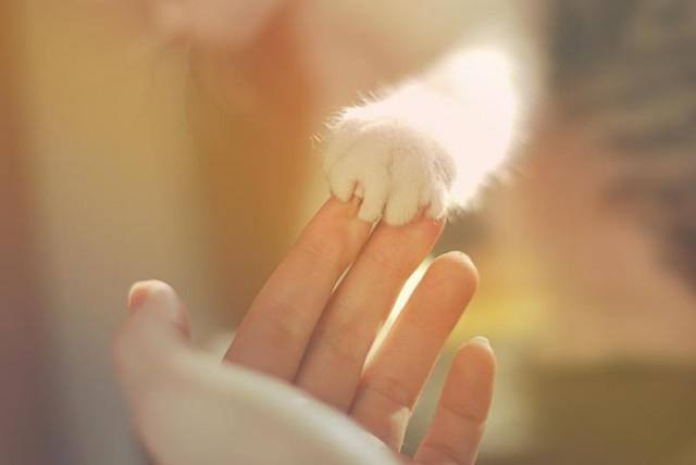 любовь, нежность, счастье есть, счастье