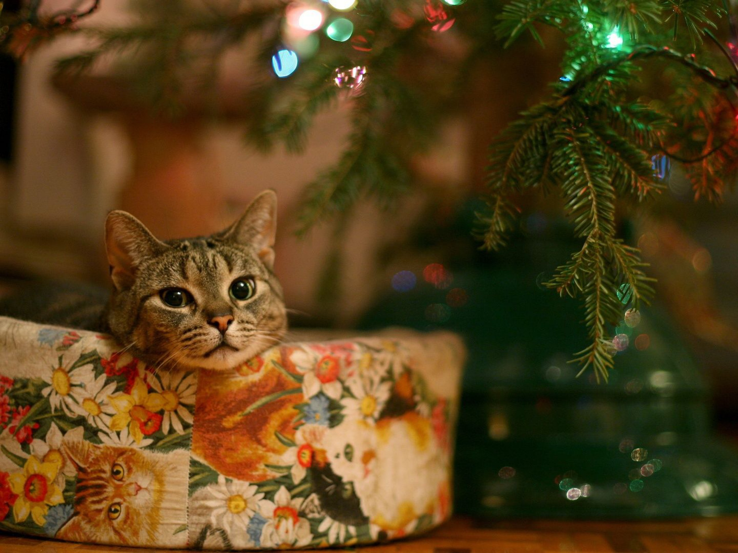 Christmas-Cat-With-Present-1920x2560