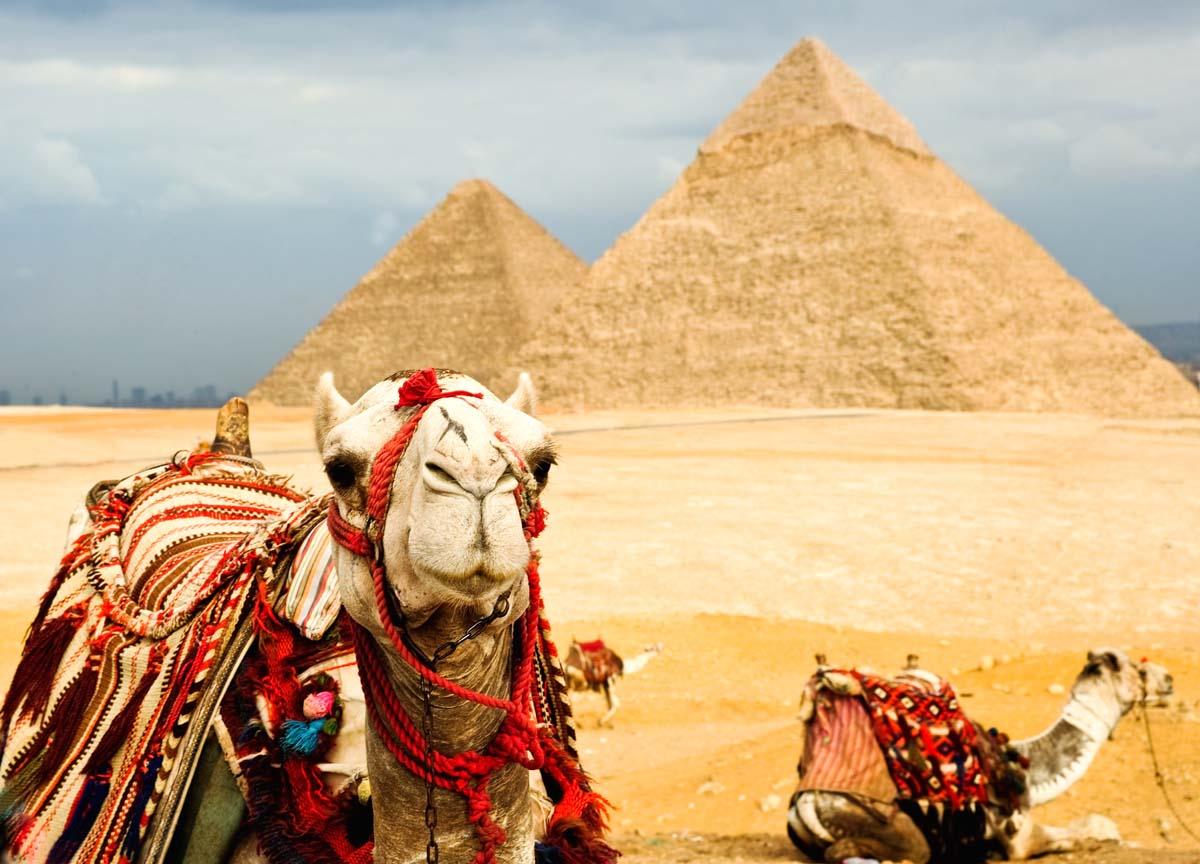 tury-v-egipet