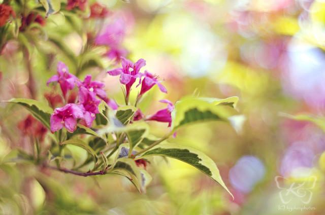 весна, свежесть, природа, цветы
