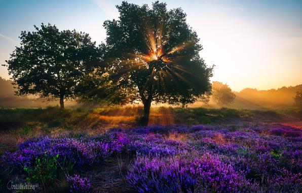 priroda-leto-avgust-derevya