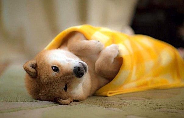 Главная задача с утра – себя не одеялизировать).jpg