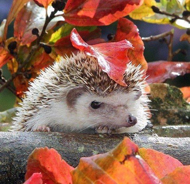 Пусть эта осень будет полна приятных сюрпризов.jpg