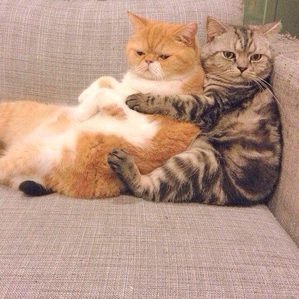 Счастье - это когда есть кого на диванчике поняшкать....jpg