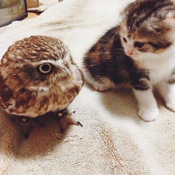 Картинка кот и сова
