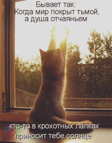 http://ic.pics.livejournal.com/anchiktigra/18346223/4524164/4524164_original.jpg