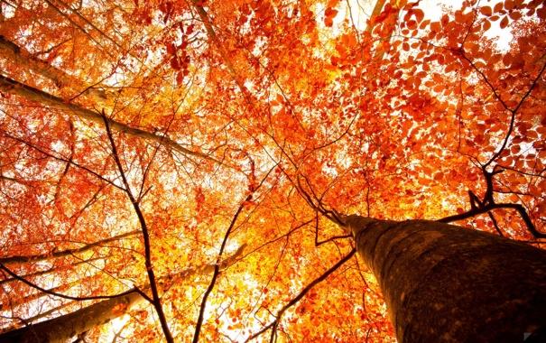 our-autumn-by-robin-de.jpg