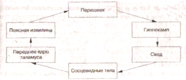 этого круга являются: