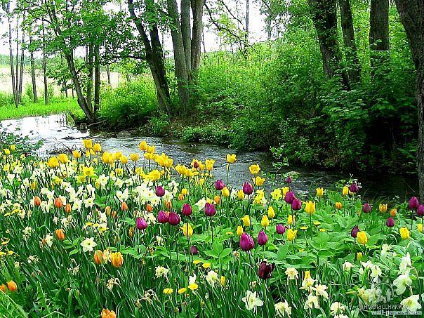 зелень, лес, цветочнная поляна, парк, красивая картинка