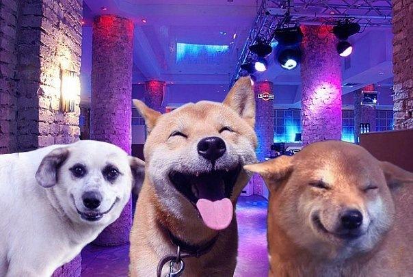 собака улыбака