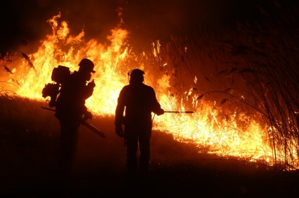 Курсы добровольных лесных пожарных 2018