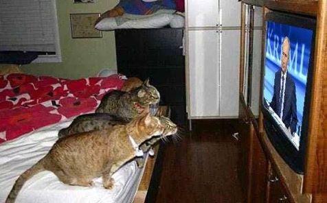 Инстинкт хищника , крысу увидели