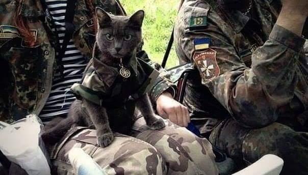 936314_800 Коты на службе Отечества