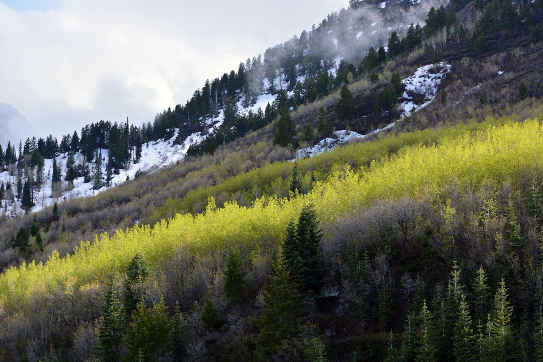 Sundance_1
