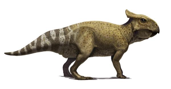 protoceratops-juvenile-correct1