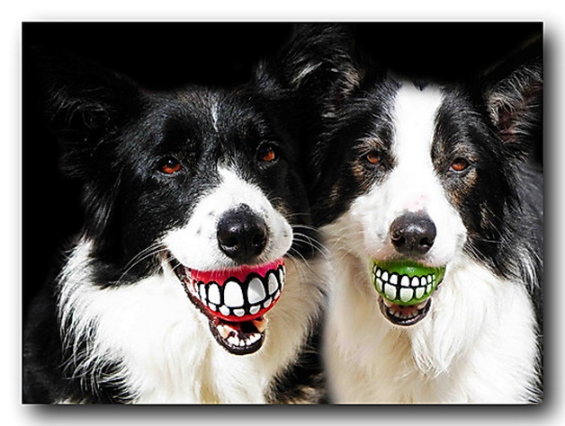 dogs smile