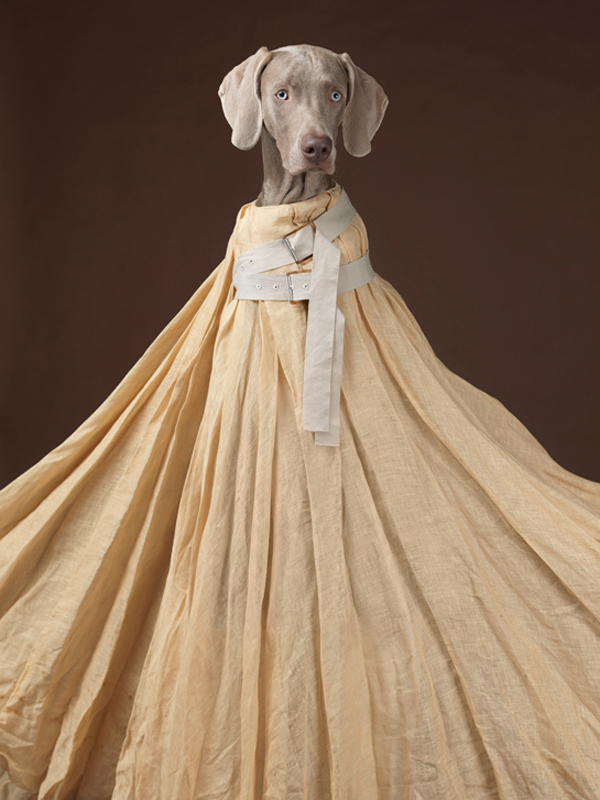 acne_william_wegman_chien_braques_de_weimar__875383542_north_545x