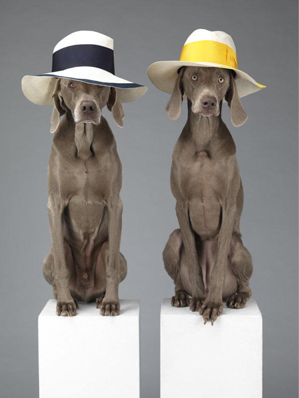 acne_william_wegman_chien_braques_de_weimar__324253025_north_545x