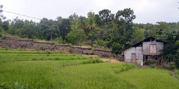 bohol-wall