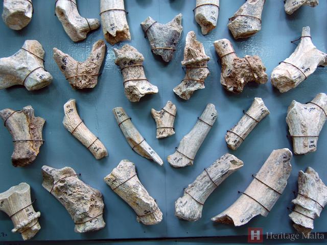 ghar-dalam-fossilised-bones1