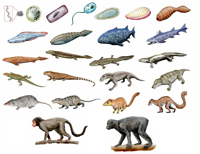 evolution-of-humans