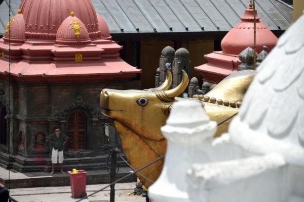 7.статуя Буйвола напротив храма Пашупатинатх  на котором ездил Шива